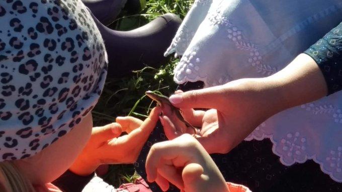 Ismerkedés a rovarokkal